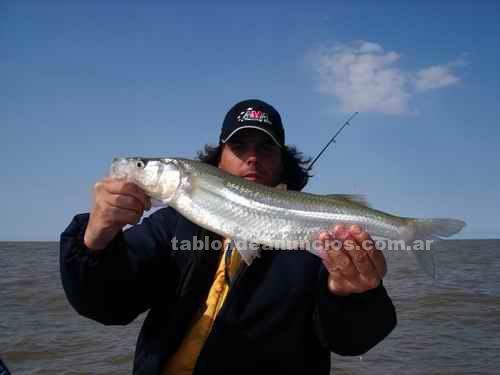 Caza y Pesca: Berisso guia de pesca embarcada los mellizos pejerrey, corvinas, bagre de mar y bogas