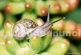 Salud/Belleza: Crema baba de caracol