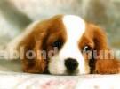 Oferta de empleo: Paseos caninos