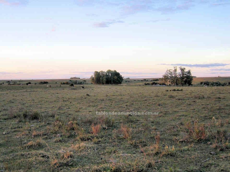 Terrenos rústicos: Campo en uruguay