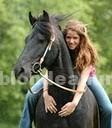 Animales/Mascotas: Akc registrados fresian caballo listo para el realojo
