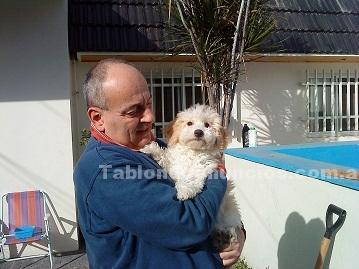 Animales/Mascotas: Rosario mascotas de compañia