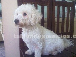 Animales/Mascotas: Cachorros de compaÑia