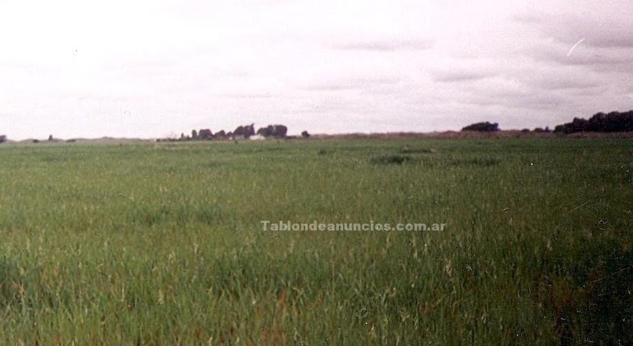 Terrenos rústicos: Vendo quinta en medanos