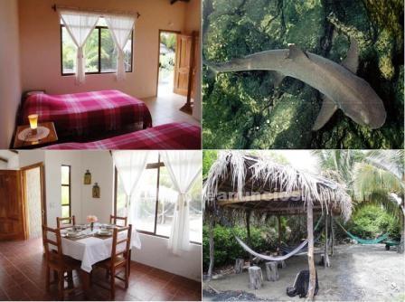 Hospedaje en casas rurales: Alojamiento  en isla isabela galapagos