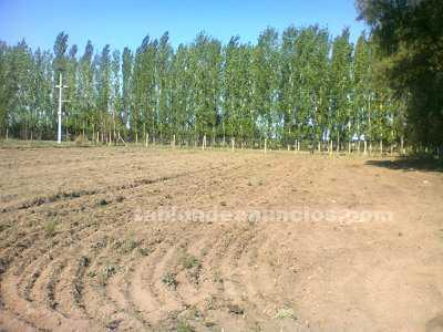 Terrenos urbanos: Lotes de 23 x100 a $ 35000 pesos en general alvear-mendoza