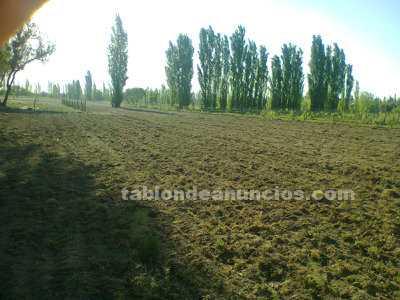 Terrenos rústicos: Terreno de 2 hect. A $150.000 pesos en gral. Alvear-mendoza