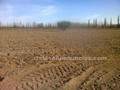 Terrenos rústicos: Terreno de 2 hect. A $100.000 pesos en gral. Alvear-mendoza