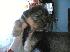 Vendo cachorro yorkshire terrier